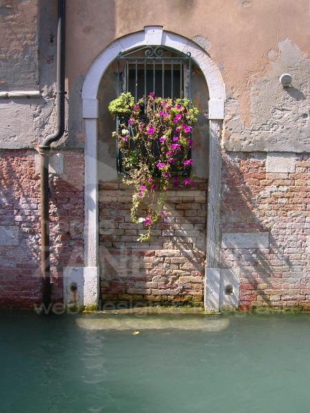 Fioritura a Venezia - 2005