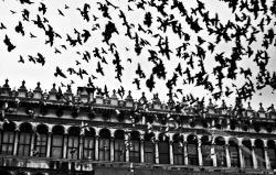 Volo di colombi in Piazza - 06/2003