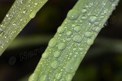 Foglie d'erba con gocce di pioggia