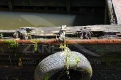 Parabordo di mototopo abbandonato a Forte Marghera - 06/2020